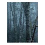 Árboles en bosque con la niebla tarjetas postales