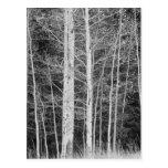Árboles en bosque durante invierno postal