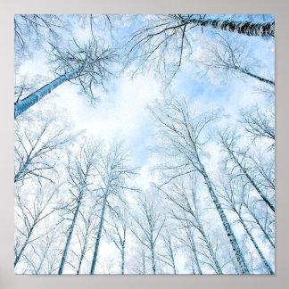 árboles en el invierno y el cielo poster