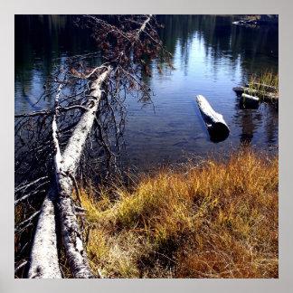 Árboles en el lago póster