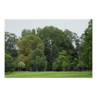 Árboles en el parque del Bute, Cardiff Posters