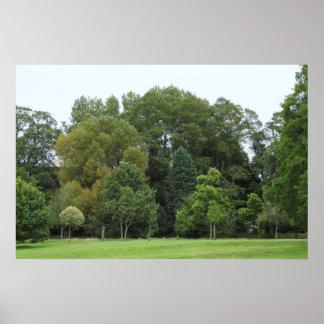 Árboles en el parque del Bute, Cardiff Póster