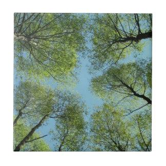Árboles en Finlandia Teja Cerámica
