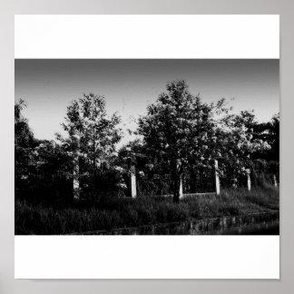 árboles en grayscale impresiones