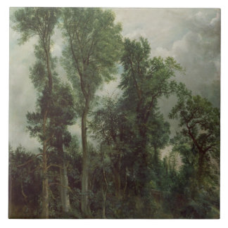 Árboles en Hampstead Azulejo Cuadrado Grande