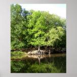 Árboles en la impresión grande del pantano de Cypr Poster