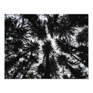 """Árboles en la montaña Forest Park, Nueva York Invitación 4.25"""" X 5.5"""""""