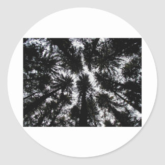 Árboles en la montaña Forest Park, Nueva York Pegatina Redonda
