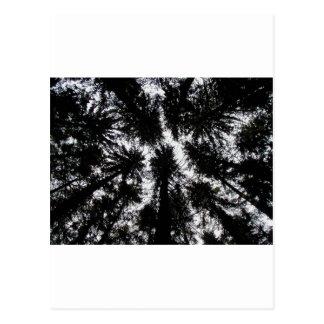 Árboles en la montaña Forest Park, Nueva York Tarjeta Postal