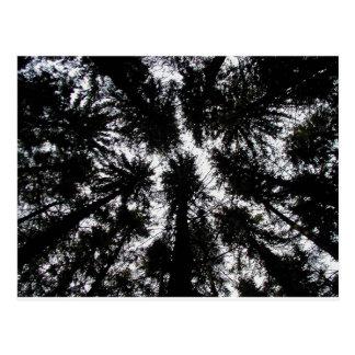 Árboles en la montaña Forest Park, Nueva York Tarjetas Postales