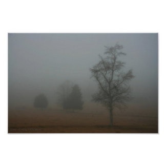 Árboles en la niebla póster