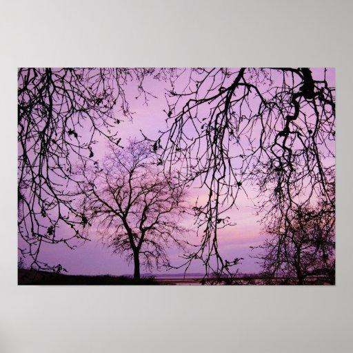 Árboles en la oscuridad poster