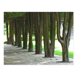 Árboles en una fila postales