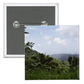 Árboles en una selva tropical, selva tropical del pin cuadrado
