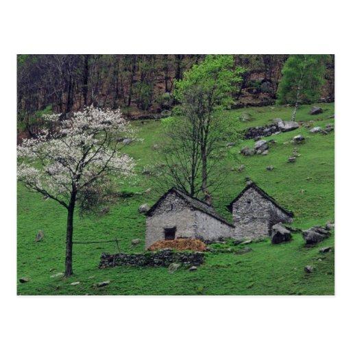 árboles florecientes blancos y flores de las choza postales