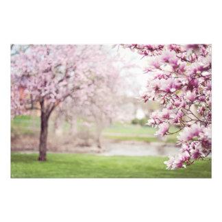 Árboles florecientes de la magnolia fotografías