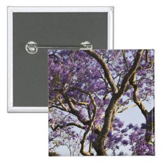 Árboles florecientes del Jacaranda en nuevo parque Pin Cuadrada 5 Cm