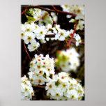 Árboles florecientes en la primavera poster