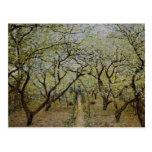 Árboles florecientes postales