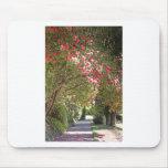 Árboles florecientes y trayectoria rosados del alfombrilla de ratones