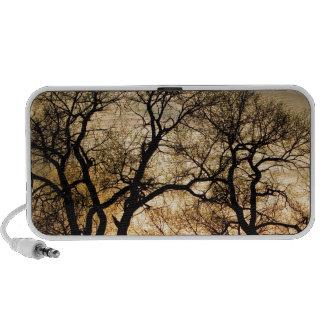 Árboles forestales del baile en la luz de oro PC altavoces