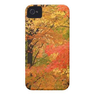 Árboles Forrest del otoño iPhone 4 Case-Mate Carcasas