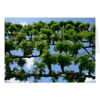 Árboles frutales en Erddig Pasillo Tarjeta De Felicitación