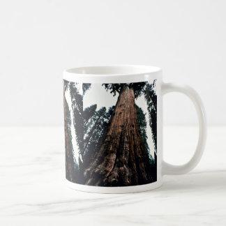 Árboles gigantes - parque nacional de secoya tazas de café
