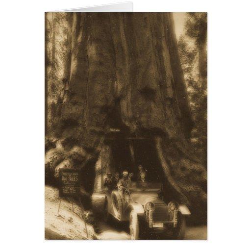 Árboles grandes California de Maraposa de la diapo Felicitacion