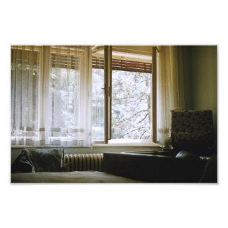 Árboles grandes Sunlit de la ventana de Europa Cojinete