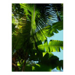 Árboles hawaianos del plátano y de coco posters