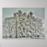 Árboles HDR   de la nieve Impresiones