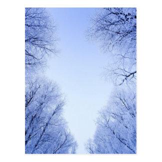 árboles helados en invierno postal