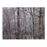 Árboles helados nieve de Nueva Inglaterra Postal