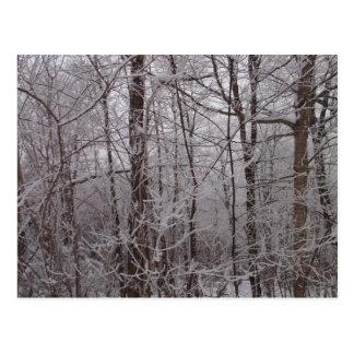 Árboles helados nieve de Nueva Inglaterra Postales