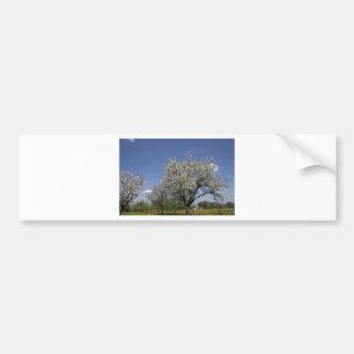Árboles hermosos de la primavera etiqueta de parachoque