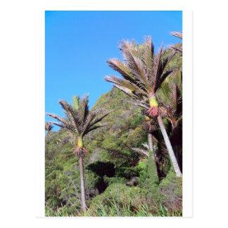 Árboles icónicos de Nueva Zelanda de las palmas de Postal