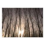 árboles impresiones fotograficas