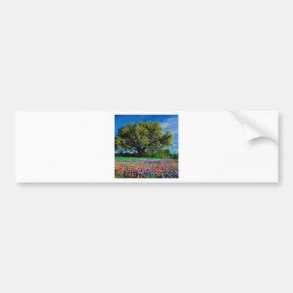Árboles Live Oak entre los Bluebonnets de Tejas Pegatina De Parachoque
