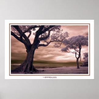 Árboles misteriosos en infrarrojo póster