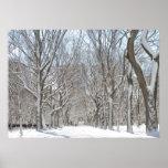 Árboles Nevado en Central Park Poster