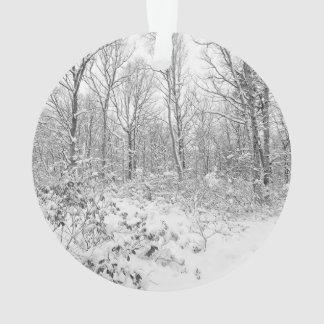 Árboles Nevado en el Poconos