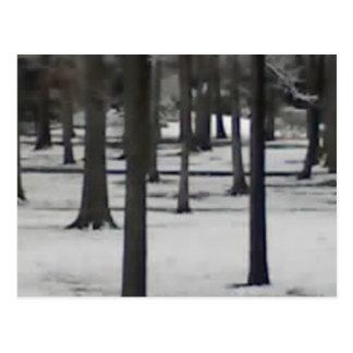 Árboles Nevado Postal