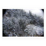 Árboles Nevado Tarjeta Postal