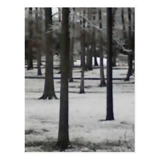 Árboles Nevado Tarjetas Postales