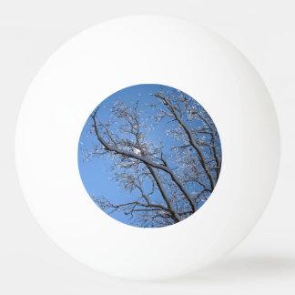 Árboles nevados del hielo que brillan pelota de tenis de mesa