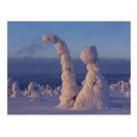 Árboles nevados en Lappland Postal