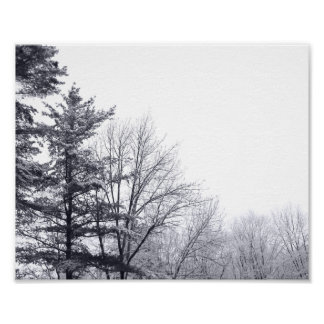 Árboles nevados: Horizontal Póster
