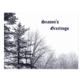 Árboles nevados: Horizontal Tarjetas Postales