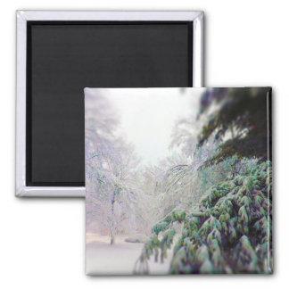 Árboles nevados, pino en la calle del kc imán cuadrado